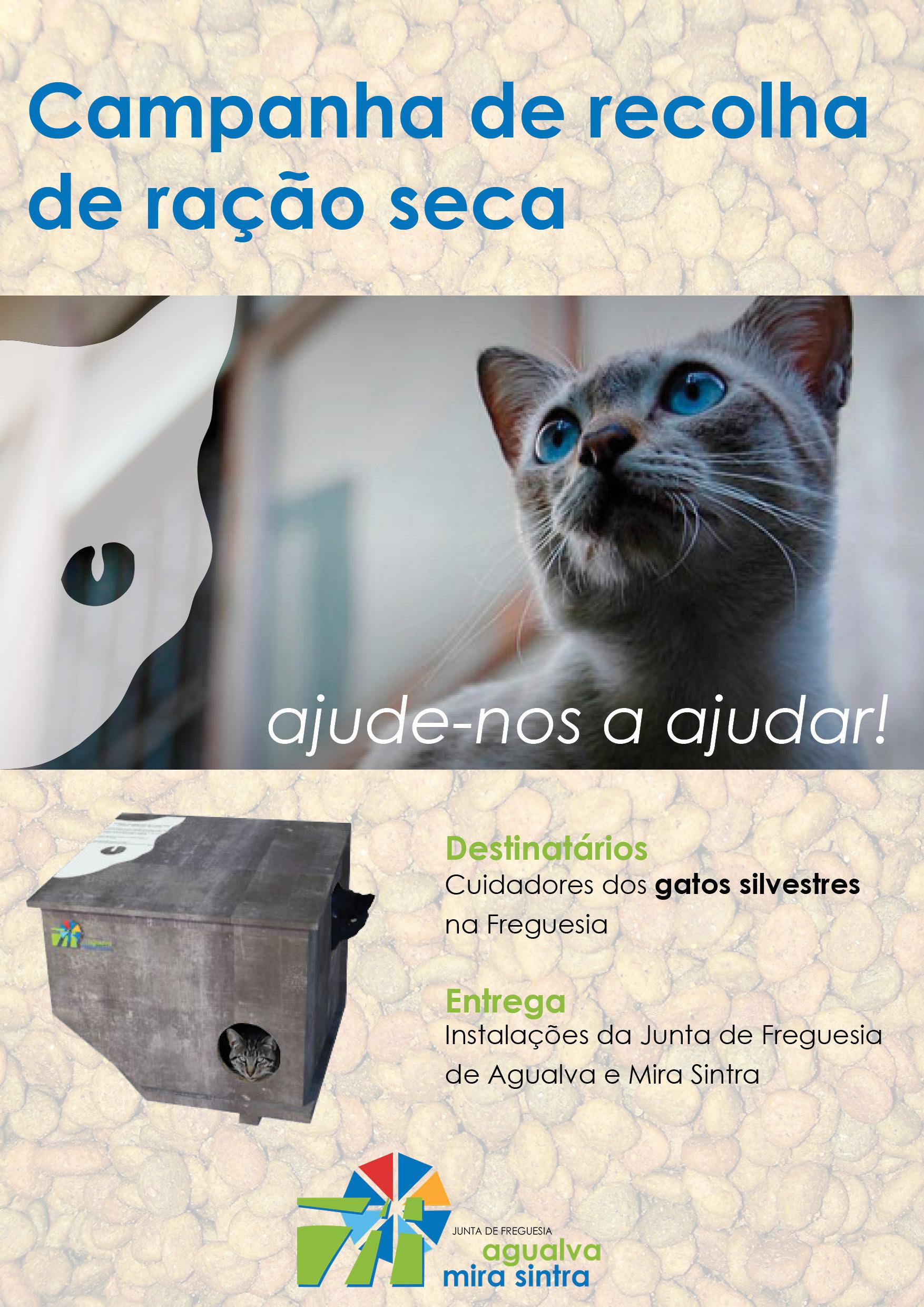 Recolha de ração para gatos